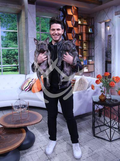 El chef James y perros